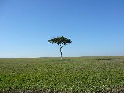 Landscape - Masai Mara