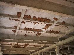 Fairy martin bottle-shaped mud nests on ceiling of parking area