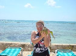 iguanas!!