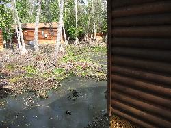 swamp swamp and more swamp