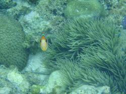 Found Nemo off the shore!