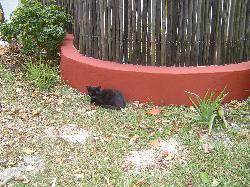 La gata serana.  She lives at the B&B.
