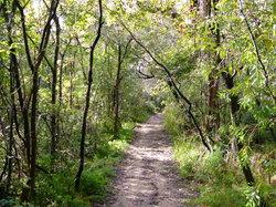 Bradleys Head Trail