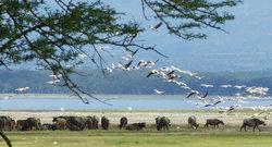 View of Lake Nakuru
