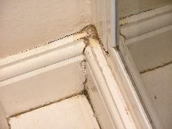 Mould around the shower