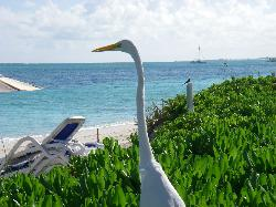 Egret by the beach