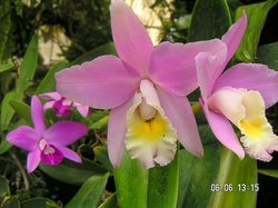 Pregetter's Orchid Garden