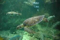 Aquarium de la Guadeloupe