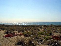 Overlooking the Pacific ocean from the Dunes