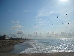 Birds/beach