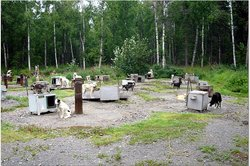 Talkeetna Sundog Kennel
