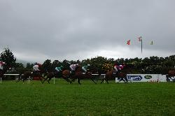 Killarney races.