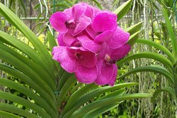 Orchid World & Tropical Flower Garden