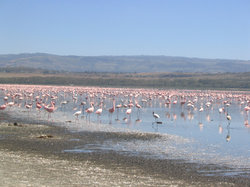 Lake Nakuru National Park