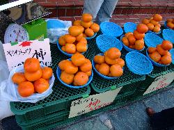 juicy persimmon fruit, Y500 per tray (18594727)