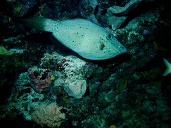 Yucab Reef
