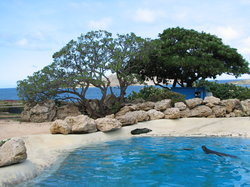 Sea Lions lounging in their enclosure