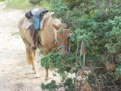 Equine Adventures