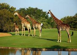 Hans Merensky Golf Estate