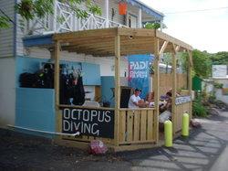 Octopus Diving