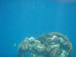 Sand Bank Snorkel