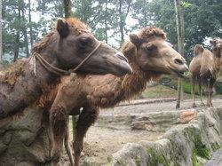 タマン サファリ動物園
