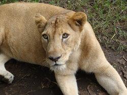 Neyyar Wild Life Sanctuary