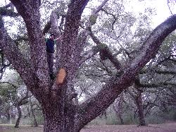 hanging out in the old oaks
