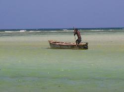watamu beach (19035880)