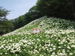 Tokyo Summer Land