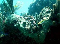 Maya Diving Center