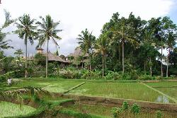 hotel, seen from the rice fields