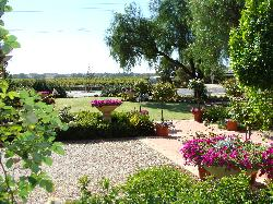 View of gardens through to the vines
