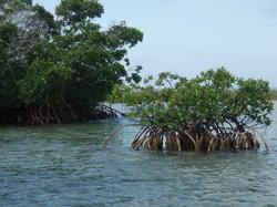 Bahamas EcoVentures