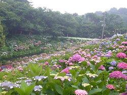 Hydrangeas Village Katahara Onsen