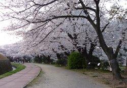 Maizuru Park