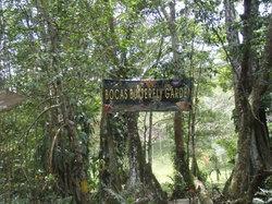 Bocas Butterfly Garden