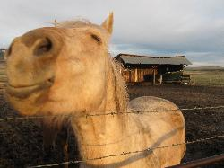 One of the horses at the Barking Mad Farm