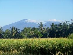 rice field (19597646)