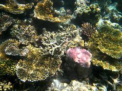 stony corals garden