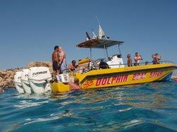 Dolphin Boat Safari