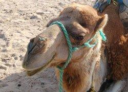 Governatorato di Sousse