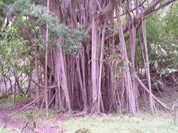 Maui Eco Adventures