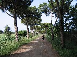 Tenuta San Carlo - tree lined walk to beach 3Kms