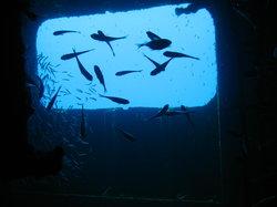 Felipe Xicotencatl Shipwreck