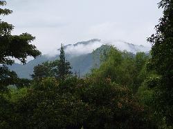 Pereira - landscape (19957081)