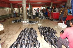 Male Fish Market