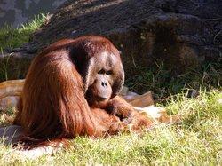 오클랜드 동물원