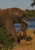 Victoria Falls (Mosi-oa-Tunya) National Park