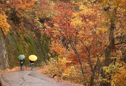Shirakawa-go: paseando por los bosques (20161588)
